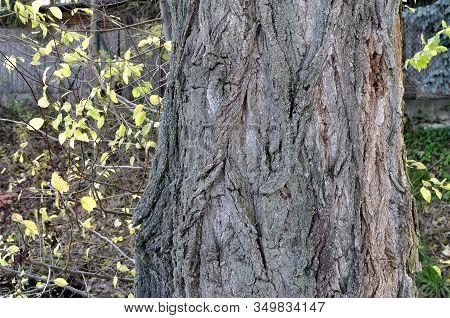 Detail Of Bark Of Old Tree Photography