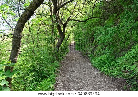 Stony Path On The Edge Of Cliff And Forrest Photography