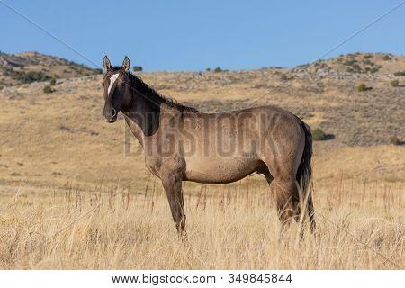 A Beautiful Wild Horse In Autumn In The Utah Desert