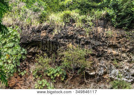 Kamokila Village, Kauai, Hawaii, Usa. - January 16, 2020: Closeup Of Green Plant Vegetation On Black