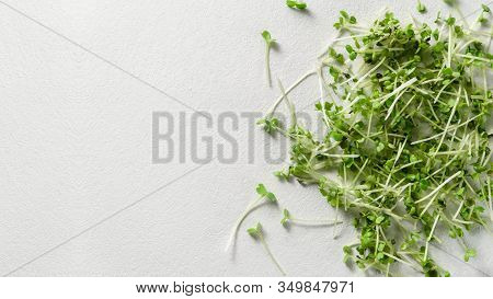 Micro Greens Arugula Sprouts On Concrete Background. Organic Food And Proper Nutrition Concept. Top