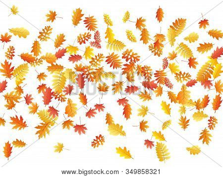 Oak, Maple, Wild Ash Rowan Leaves Vector, Autumn Foliage On White Background. Red Gold Yellow Oak Dr