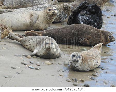 America, Aquatic Mammals, Beach, Beautiful, Biology, Blubbery, California, California Coast, Carpint
