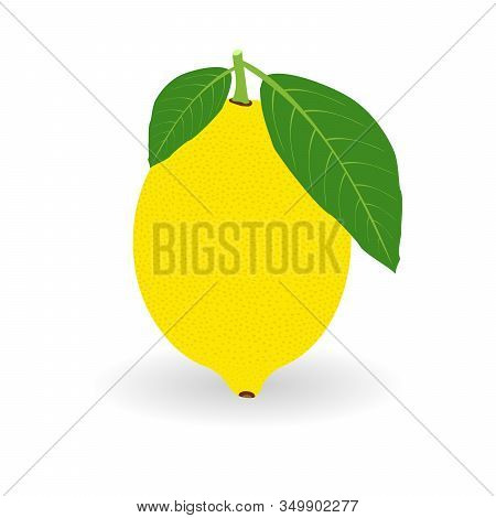 Vector Realistic Lemon Icon With Shadow Isolated On White Background. Fresh And Juicy Lemon. Fruit I