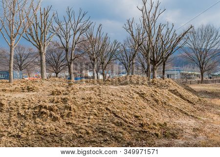 Rural Landscape Of Leafless Trees Recently Planted In Fresh Mound Of Dirt With Buildings And Blue Sk