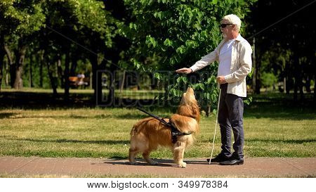 Visually Impaired Man Giving Command To Guide Dog Training Pet In Park, Cynology