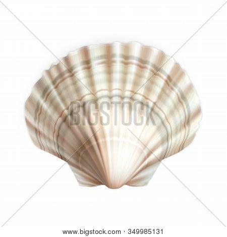 Scallop Shell Decorative Ocean Mollusk Vector. Natural Scallop Cockleshell Fish Exotic Food And Trav
