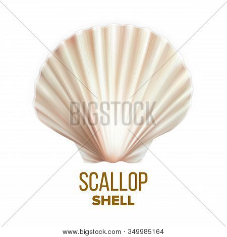 Scallop Shell Ocean Mollusk Protection Vector. Scallop Cockleshell Marine Seashore Vacation Decorati