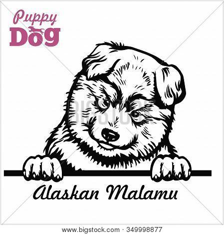 Puppy Alaskan Malamute - Peeking Dogs - Breed Face Head Isolated On White