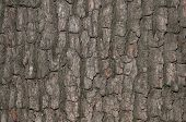 Close up of old tree bark texture poster