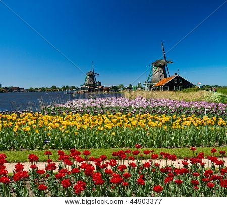 Photo of windmill in Holland with blue sky poster