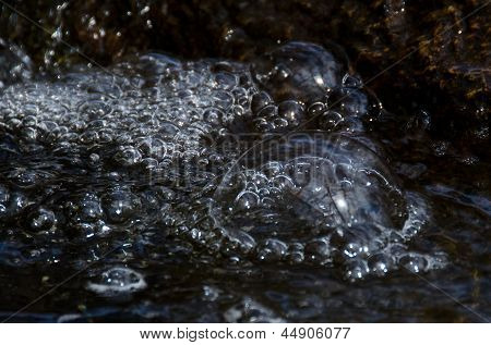 Nature Abstract - River Bubble Reflecting The Barren Trees
