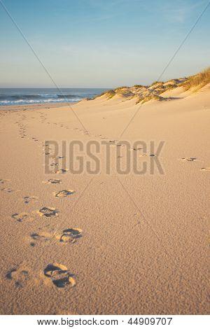 Footprints and Dunes portrait