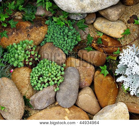 green palnt with rock
