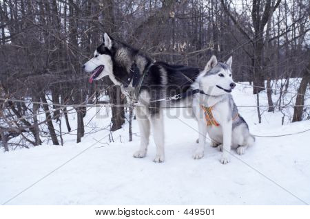 poster of two dogs on a snow