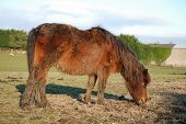 Neglected pony new arrival at a rescue centre poster