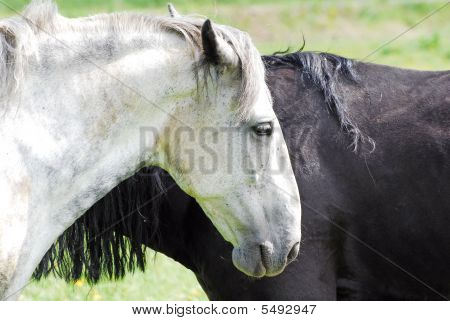 Black And White Horse In The Meadow