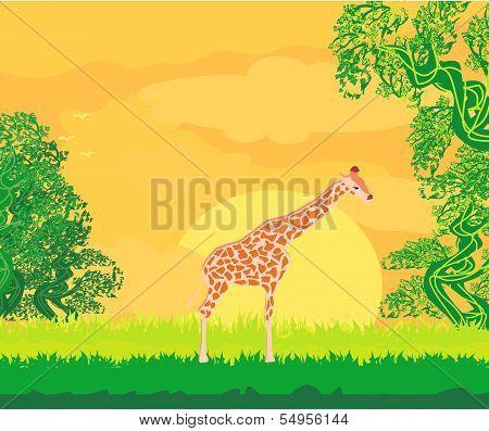 Giraffe In Jungle Landscape
