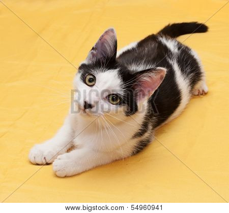 White Cat With Black Spots Teenager Lying On Golden Background