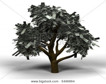 Money Tree Dollar