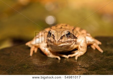 Close-up From A Yellow Frog