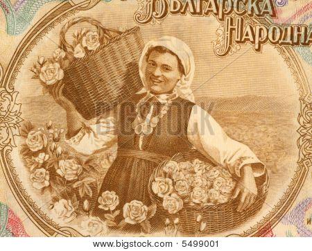 Woman Harvesting Roses