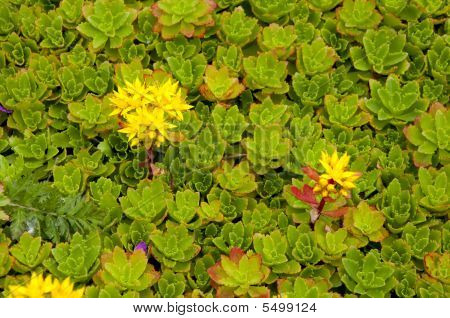 Alpine Plant Background