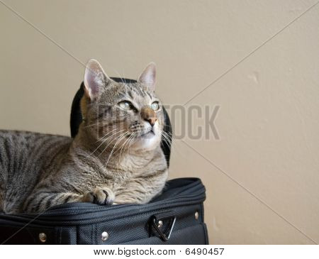 Cat On The Bag