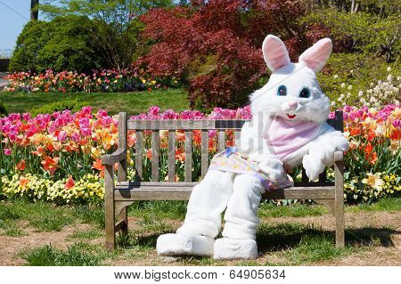 Easter bunny on bench