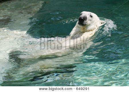 polarbear 2615