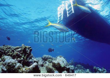 Snapper Reef
