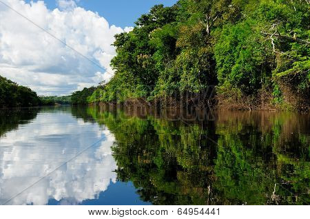 Amazon River Landscape In Brazil