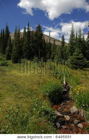 Meadow on Mountain
