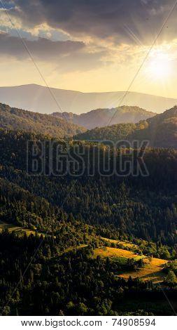 Fir Forest On A  Hill At Sunset