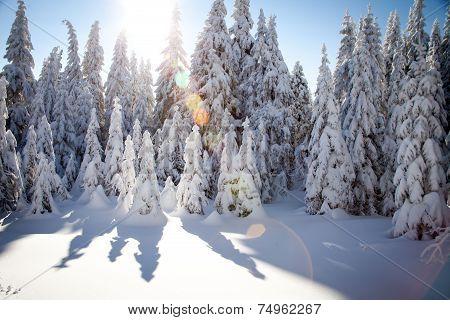 téli napsütés
