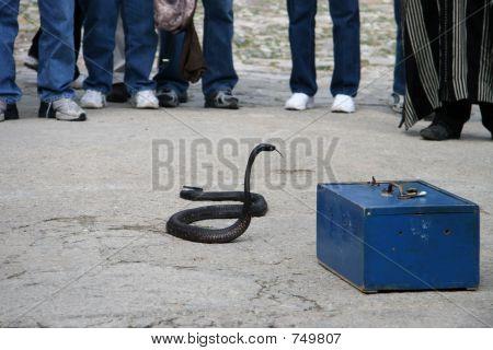 Dangerous Snake