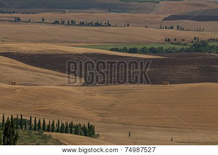 Tuscany Fields In Summer