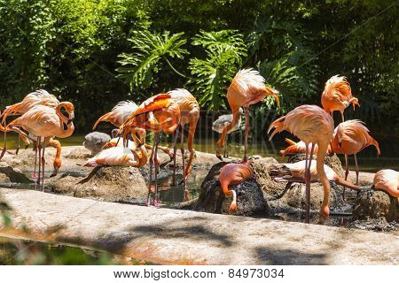 Flock of flamingos in a zoo, Barcelona Zoo, Barcelona, Catalonia, Spain