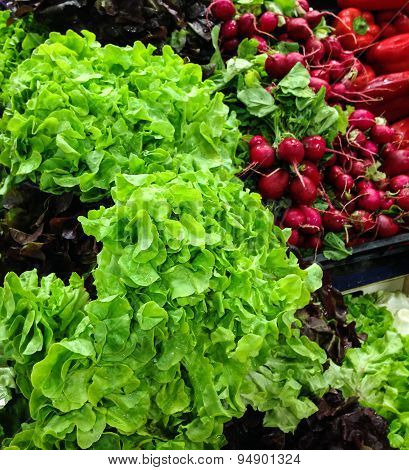 Healthy green salad and red radishes