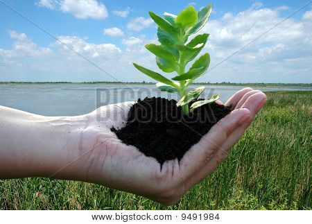 Sustainable Development-green Plant In Woman`s Palm