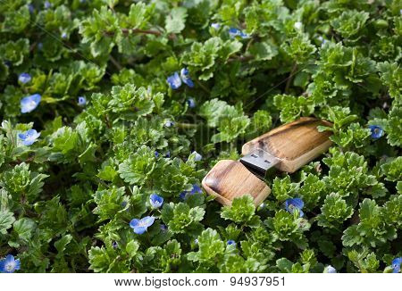 USB flash drive in special wood shell cladding, shot as outdoor macro scene