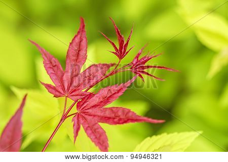 Red Leaves On A Yellow Background