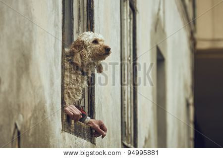 Dog With Human Hands