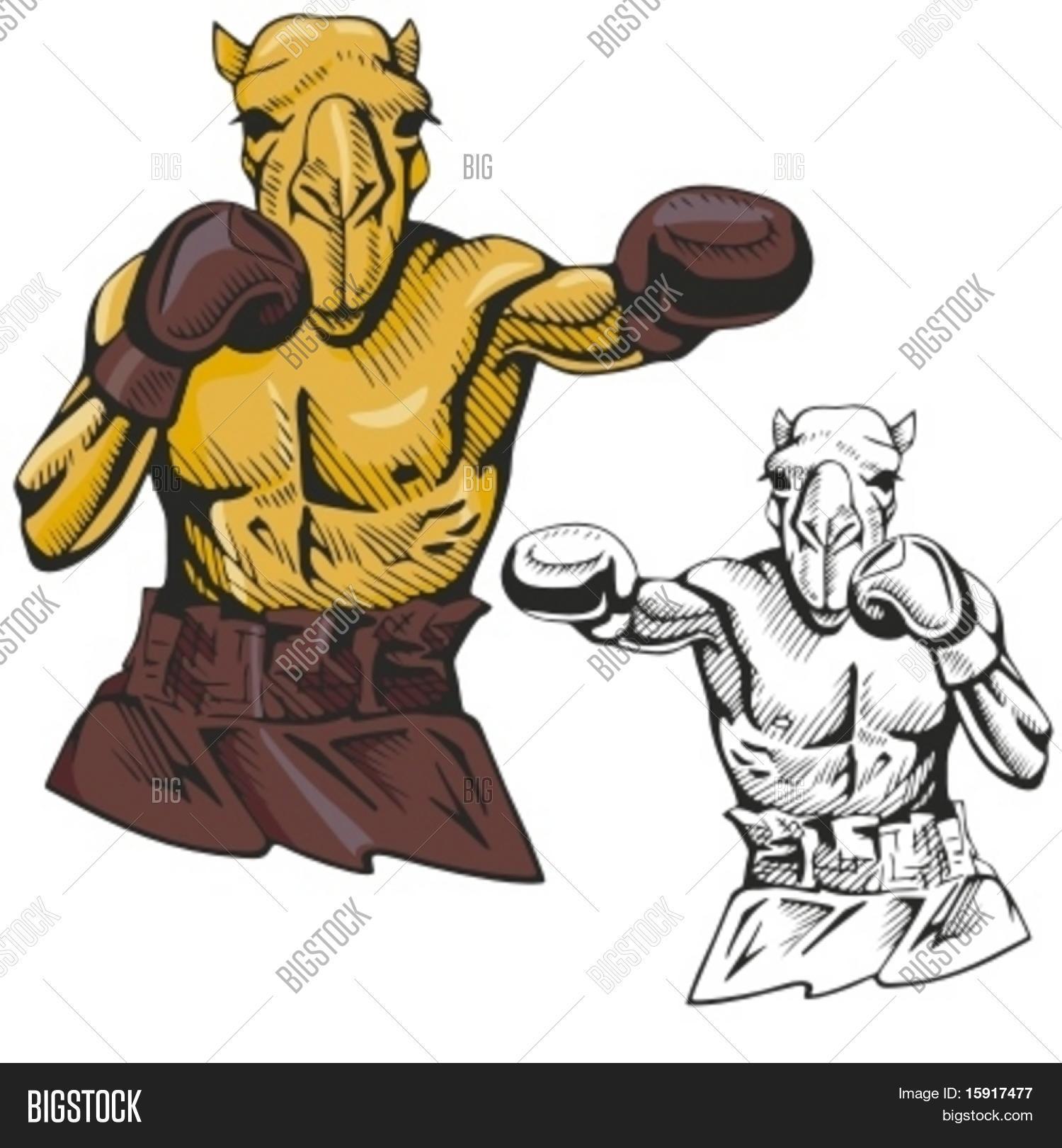 Vector y foto Camello Mascota De Boxeo Para | Bigstock