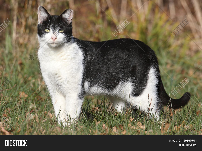 How many neutered cats live 54