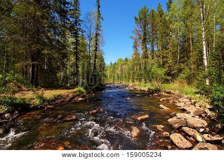 Rapid mountain river in the Ural taiga blue sky sunny day