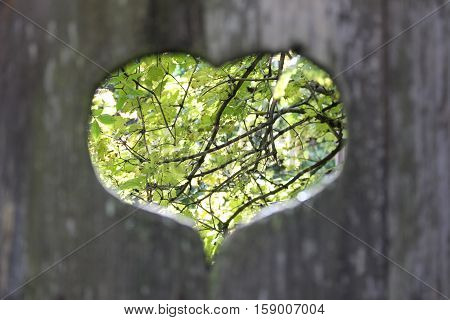 Valentine's Day, cutouts in the form of heart in the gate of the old untreated wood, view of trees through the hole in the gate