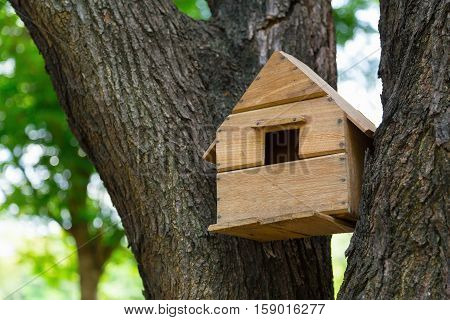 House of the birds in the trees.