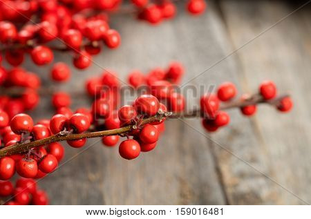 Red berries holly on wooden background