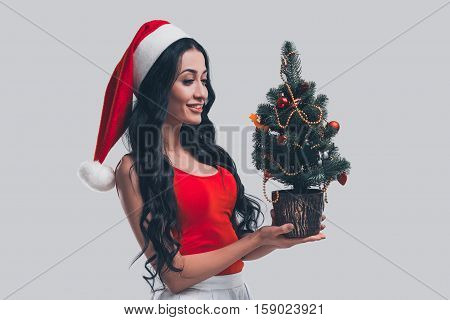 Preparing to Christmas. Attractive young woman in Santa hat holding little Christmas tree and looking at it with smile while standing in front of grey background
